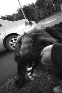 Dog_Bite.jpg